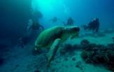 Egypt Safari, loď Reef Master St. Jones 9. - 16. 4.