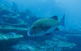 Maledivy Safari, loď Carpe Diem 10. - 19. 11.