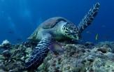 Maledivy Safari, loď Carpe Diem 10.-19.11. a 17.-26.11.