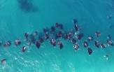 Maledivy Safari DEEP SOUTH, Carpe Diem 3.-14.3.2018