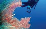 KOMODO potápění, denní výjezdy (celoročně)