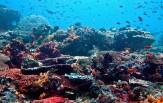 Ostrov Nusa Lembongan, CELOROČNĚ