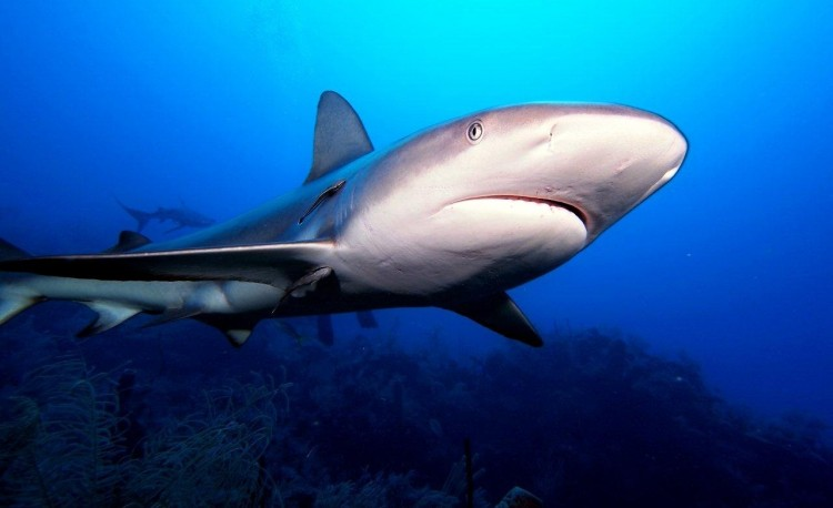 149665196338-151-shark4.jpg