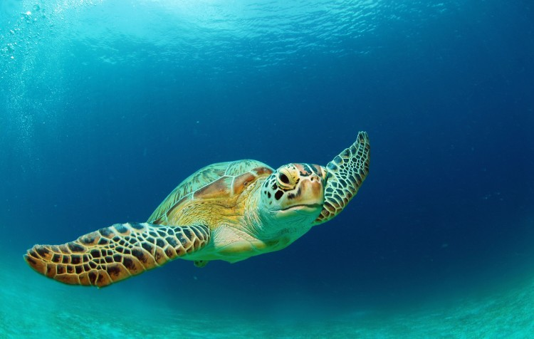 Želví ostrovy Gili, CELOROČNĚ ( 3 noci )