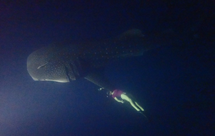 Maledivy Safari DEEP SOUTH, Carpe Diem 6. - 17. 3. 2020