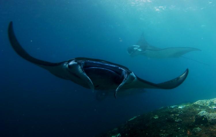 NP KOMODO, Safari lodí Maestro Aldo ( 18.-23.10. 2019 )   4 dny potápění z lodi  + 2 dny na souši ( Labuan Bajo)